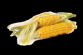 corn-1751321_1920_edited.png
