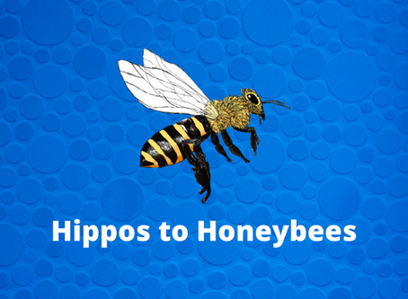 Hippos to Honeybees