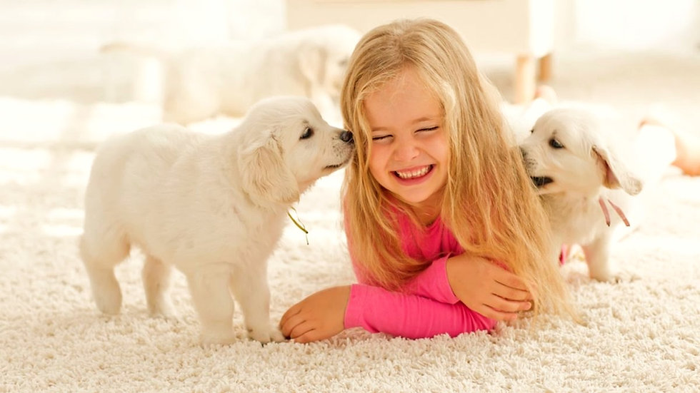 Professional Home Carpet Cleaning