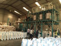 50t maize mills