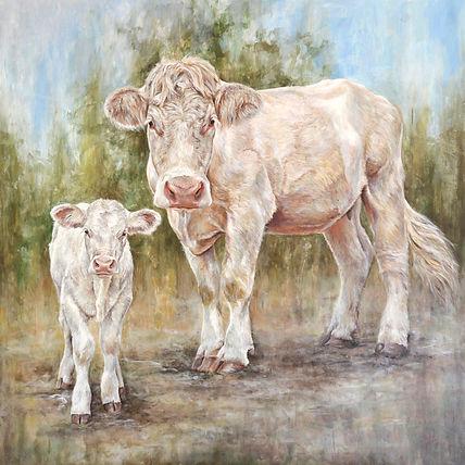 Charolais koe en kalf