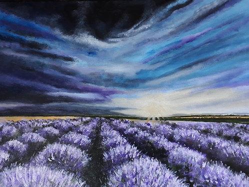 Lavender Fields A3 print