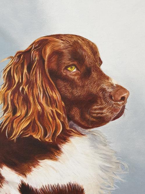 Springer Spaniel painting A4 print