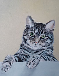 Tabby cropped poster.jpg