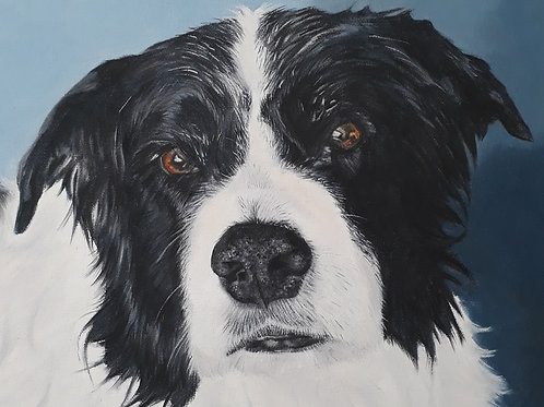 Collie dog painting A3 print