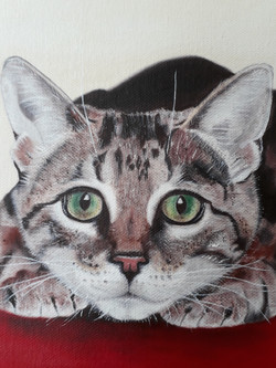 Cat crouching closeup