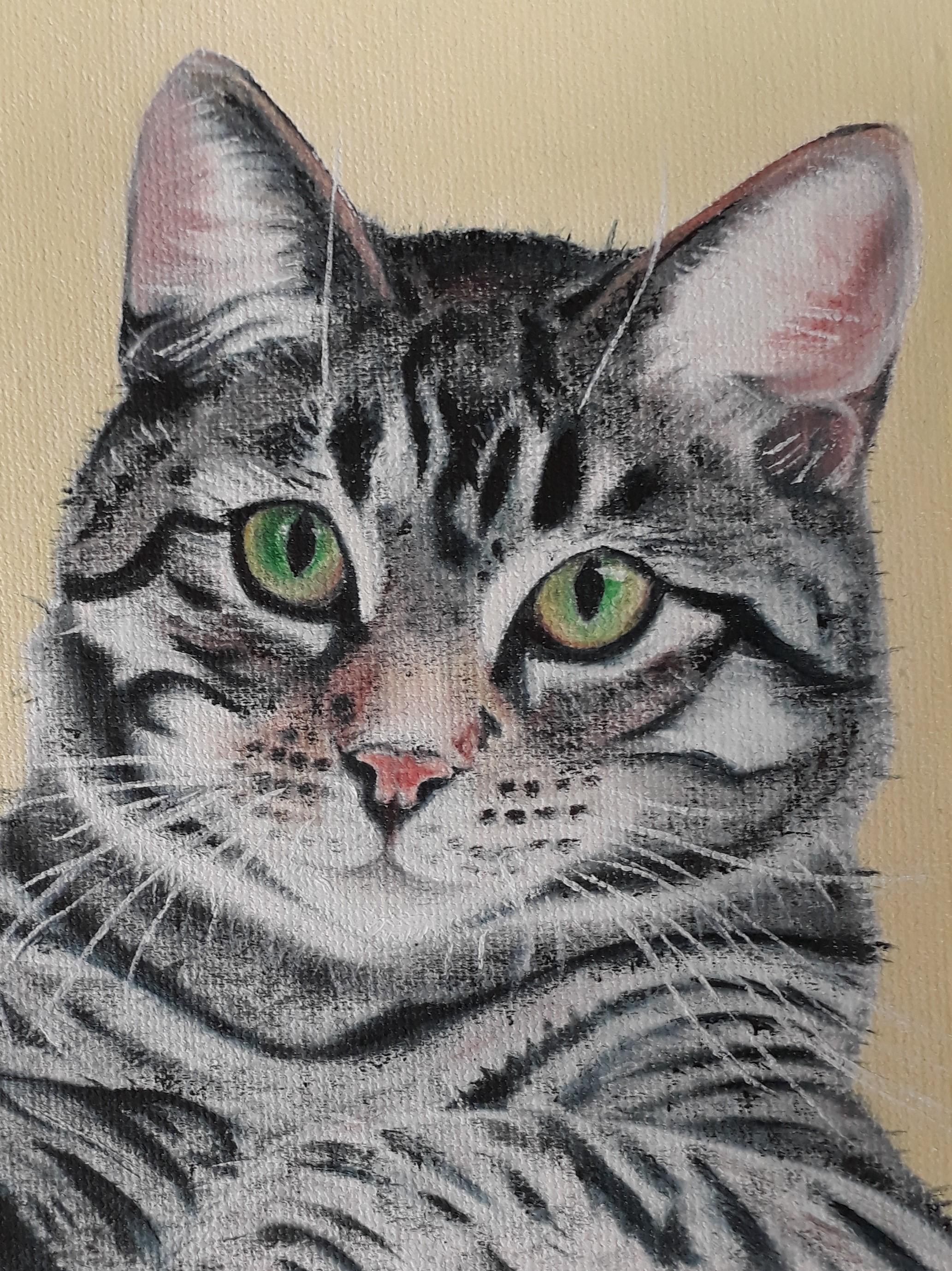 Cat tabby closeup