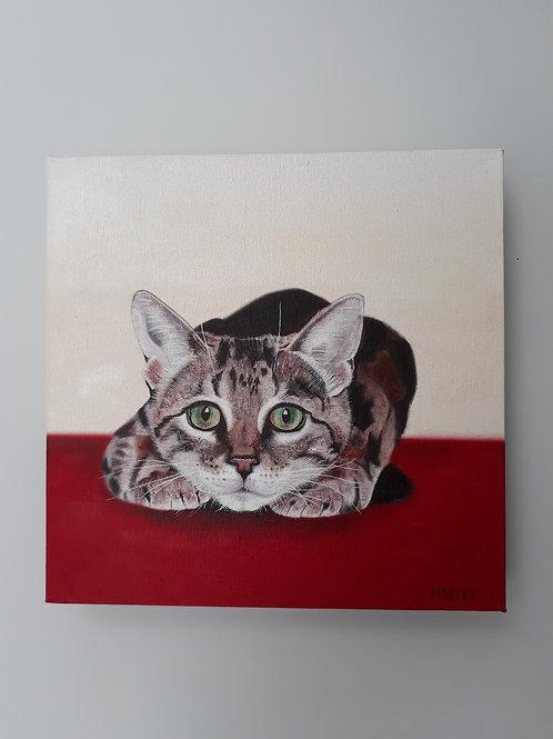 Crouching Tabby Cat