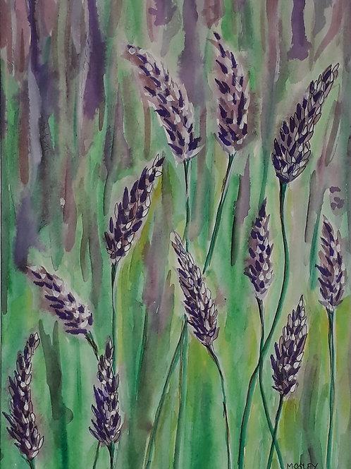 Lavender Field A4 Print