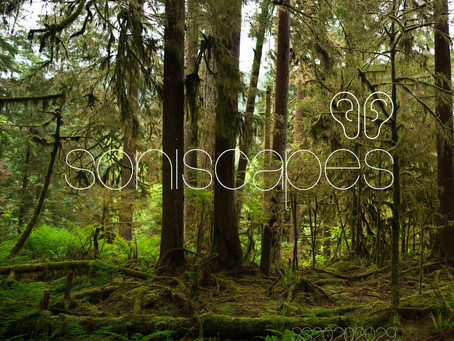 City Park Forest Ambisonic Soundscape in North Vancouver Canada