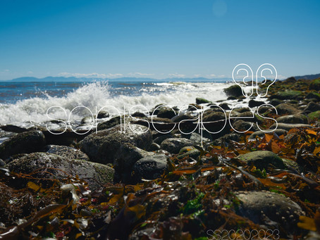 Kelp & Rocks Pacific Sea Wash Ambisonic Soundscape