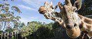 Auckland Zoo.jpg