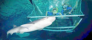 Kelly Tarltons Shark Cage Experience.jpg
