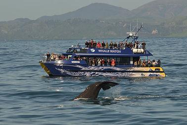 Kaikoura Whale Watch.jpg