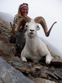 Kara Robertson with her monster Chugach ram. This was Kara's fourth sheep hunt (first with us) and she hadn't even seen a legal ram on the other three. We are so happy she broke her jinx in the best way possible. Kara's ram is 42 5/8 x 39 0/8 x 13 4/8.  B&C green score 166 7/8 and 10 years old. This is the biggest ram for us so far in 2019 by 1/8 inch. Great shooting Kara, congratulations.