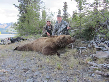 Boar Grizzly