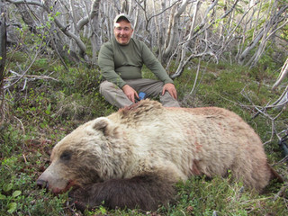 Blond Boar Grizzly