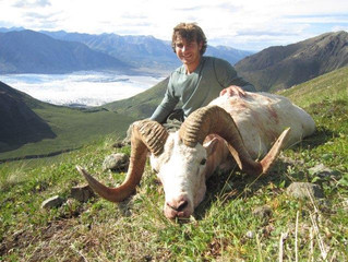 19 year old Graham Grisedale with his first ram taken on opening day. 39 1/8 x 38 2/8 x 13 3/8. B&C green score 158 7/8. Graham had a great time but I think he has come down with a bad case of sheep fever.