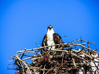 Células: O ninho das águias.