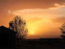 Dusty Sunset cd.jpg
