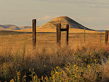 fenceline (1 of 1).jpg