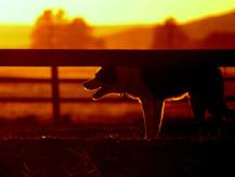 sunset Sept 29 043.jpg