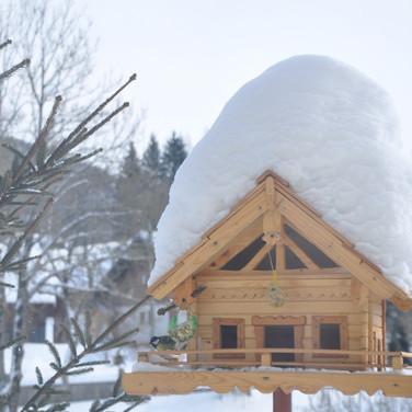 Unser Vogelhaus