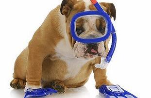 Dog-Swim.jpg