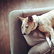 Our sweet pup, Scarlett