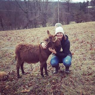 Daphne the Mini-Donkey!