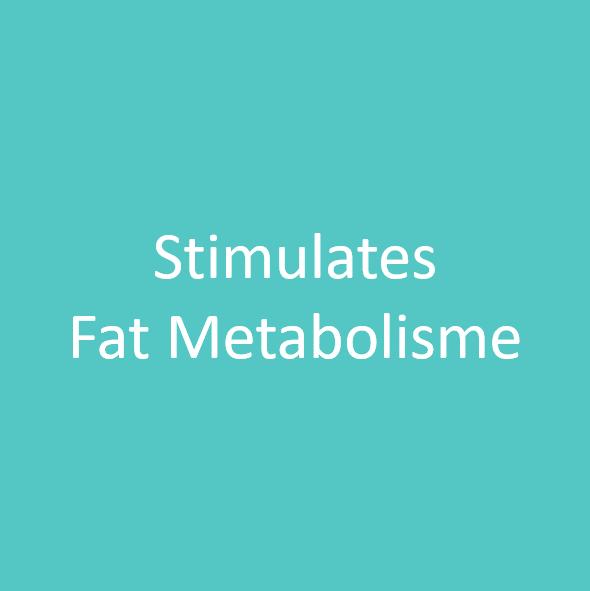Fat Metabolisme