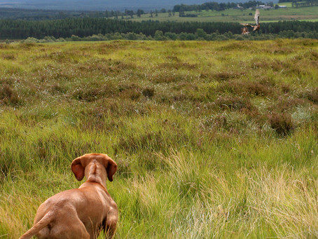 Not long now until the Spring grouse counts