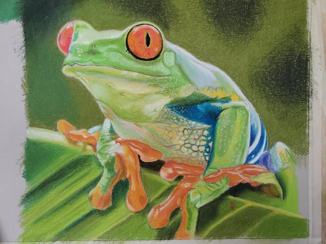 Tropical Frog.jpg
