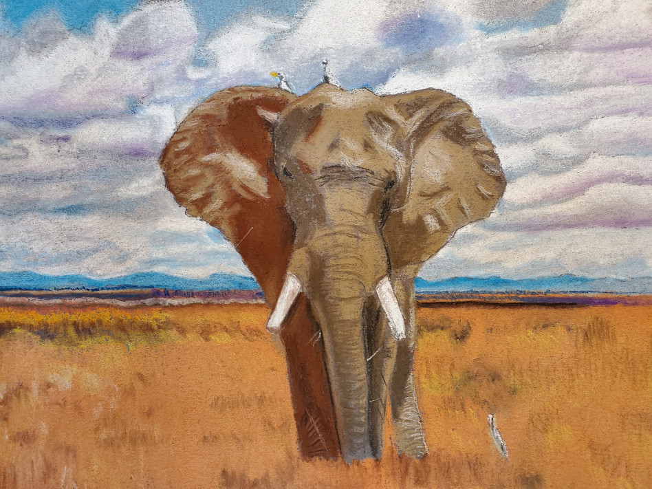African Eliphant