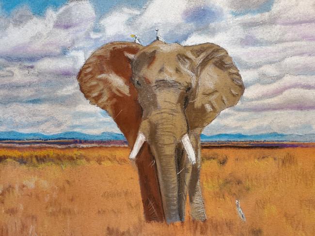 African Eliphant