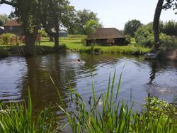 Website pond
