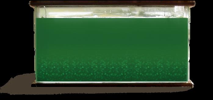 spirulina tank.png