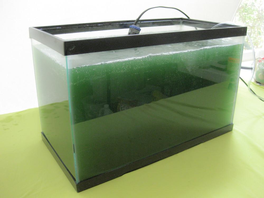 Spirulina growing kit