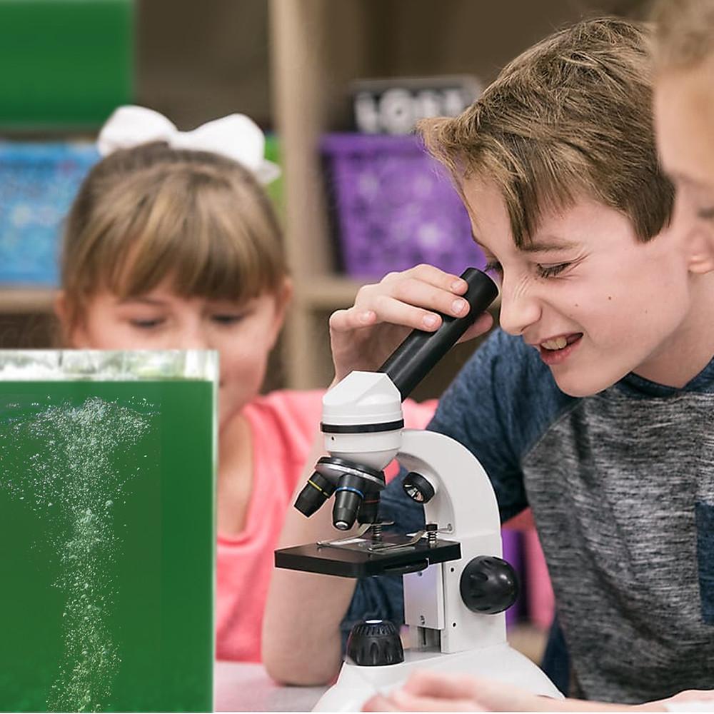Spirulina culture  at school