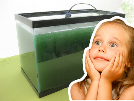 Food of the Future: This is why you should grow Spirulina