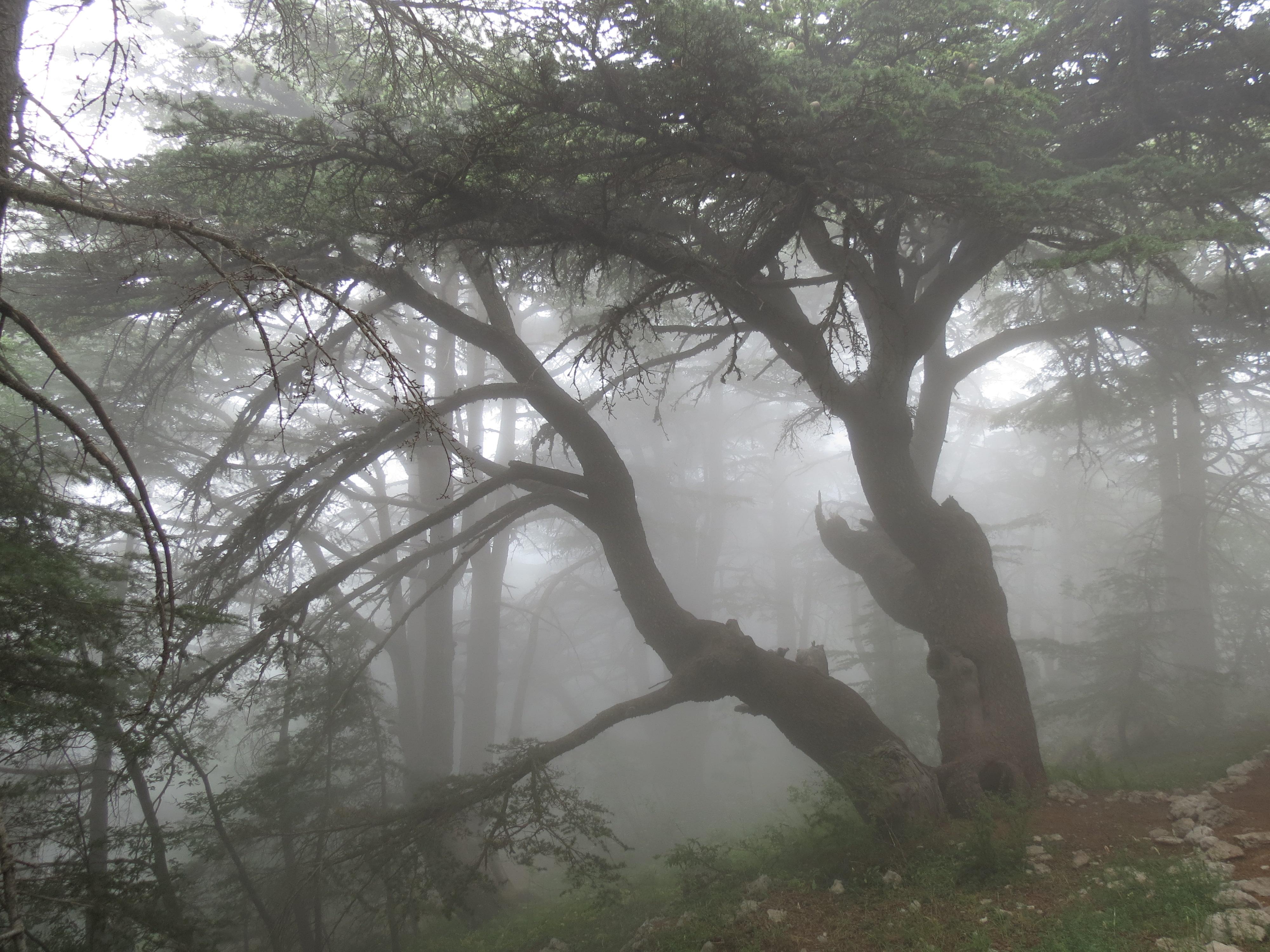 Cedars Barouk III