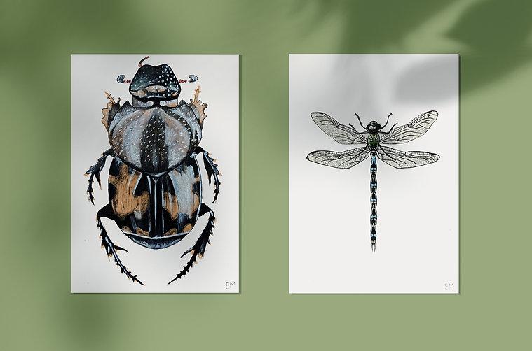 Illustration scarabée/libellule