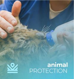 IM Protecting Animals