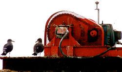 seagulls & a generator