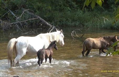 I Know Those Horses
