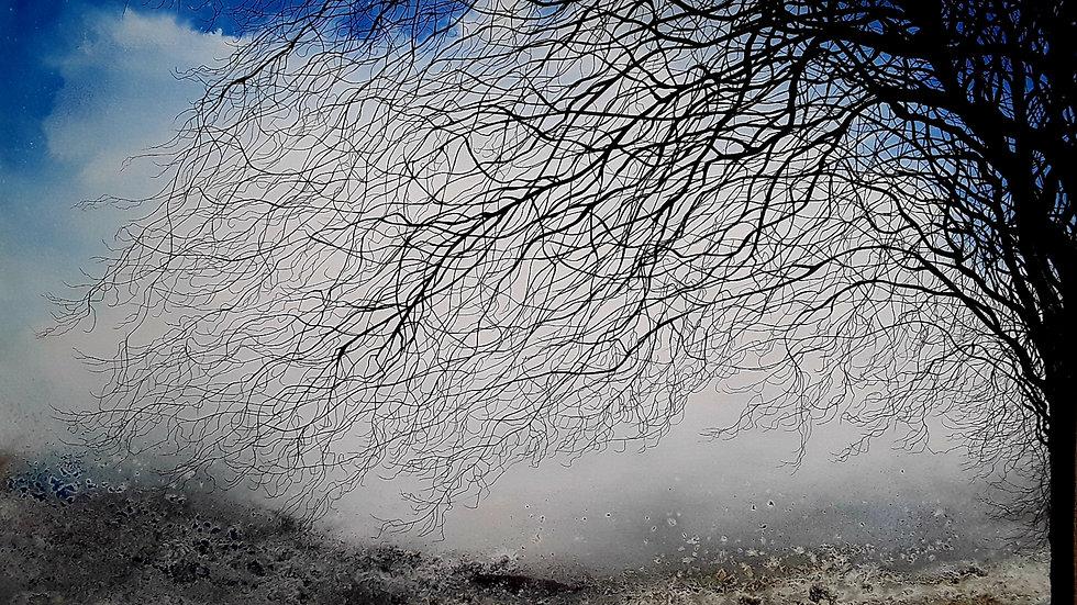 Twigs in a clear winter sky