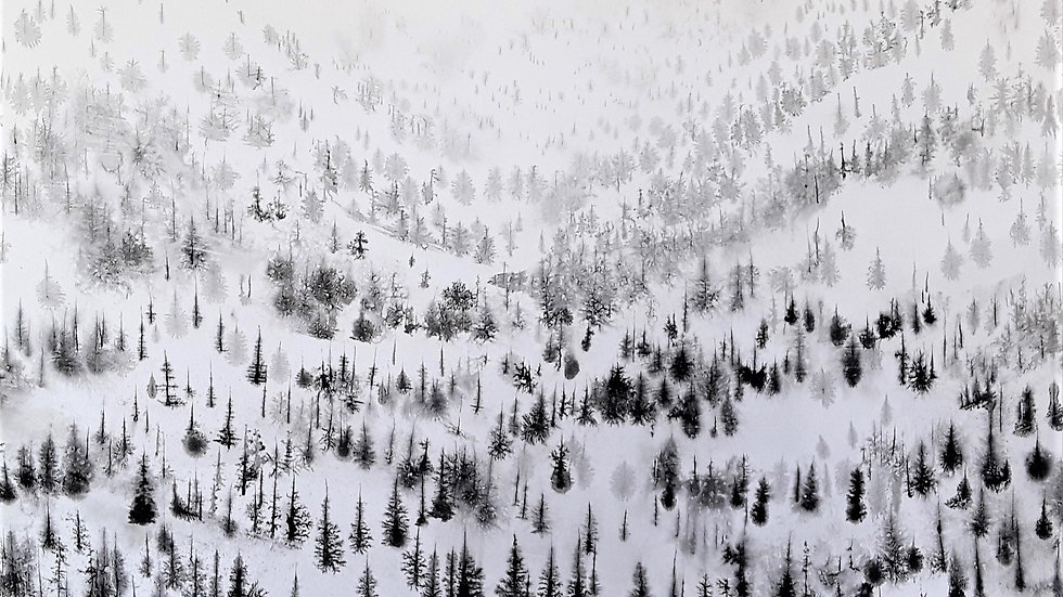 Snowscape, ascending paths