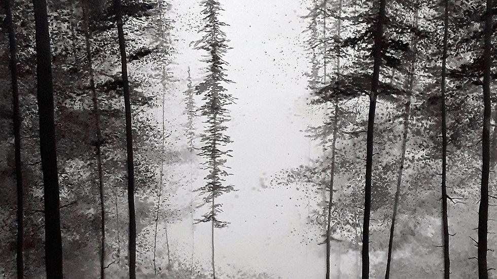 Forest portrait - Passage