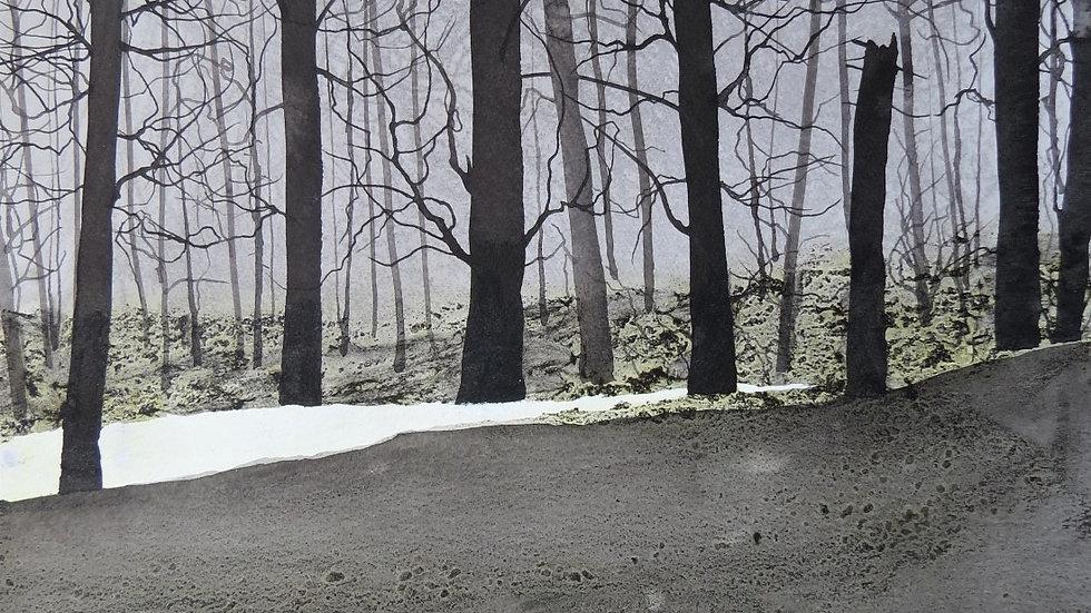 Winter woods path