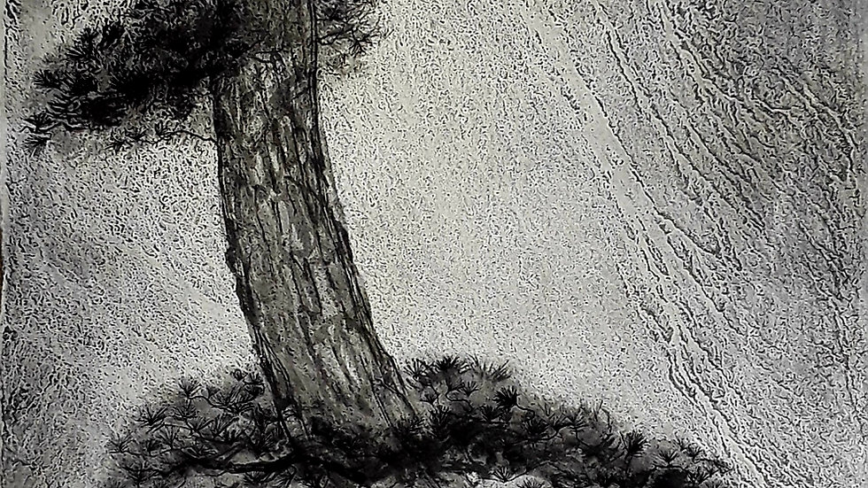 Rain pine